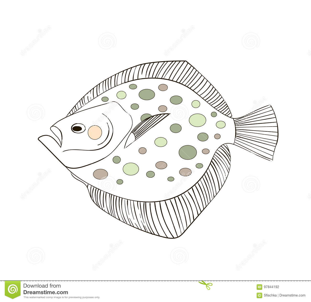 Drawing Flounder Stock Illustrations 359 Drawing
