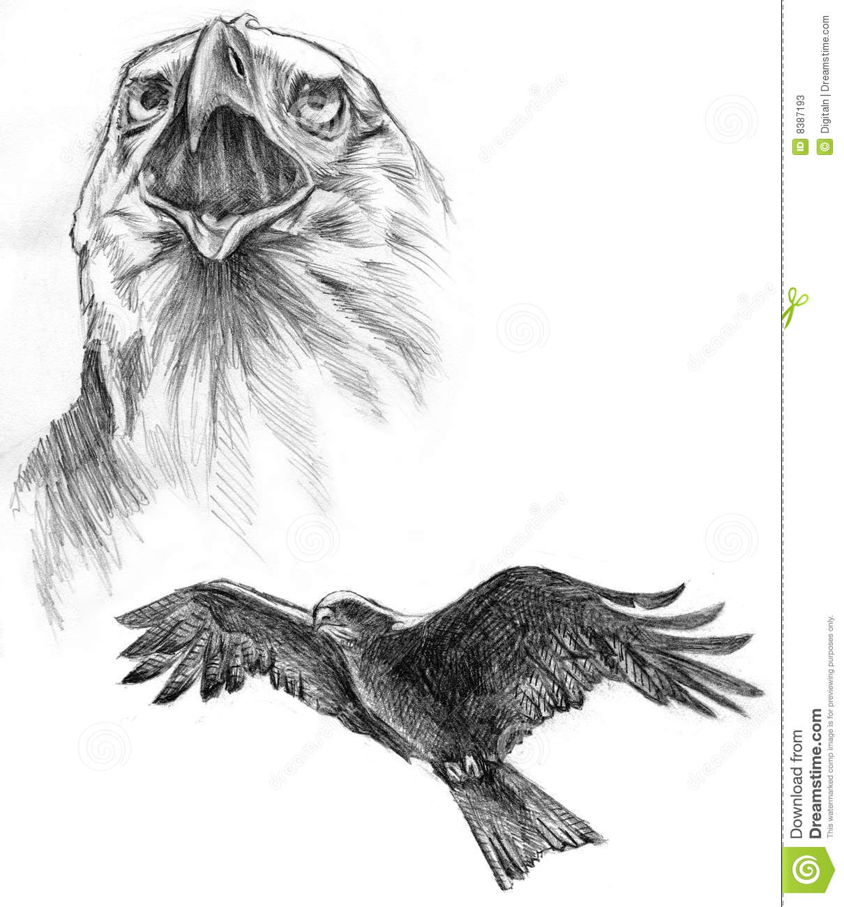 Drawing Of Two Eagles Stock Illustration Illustration Of