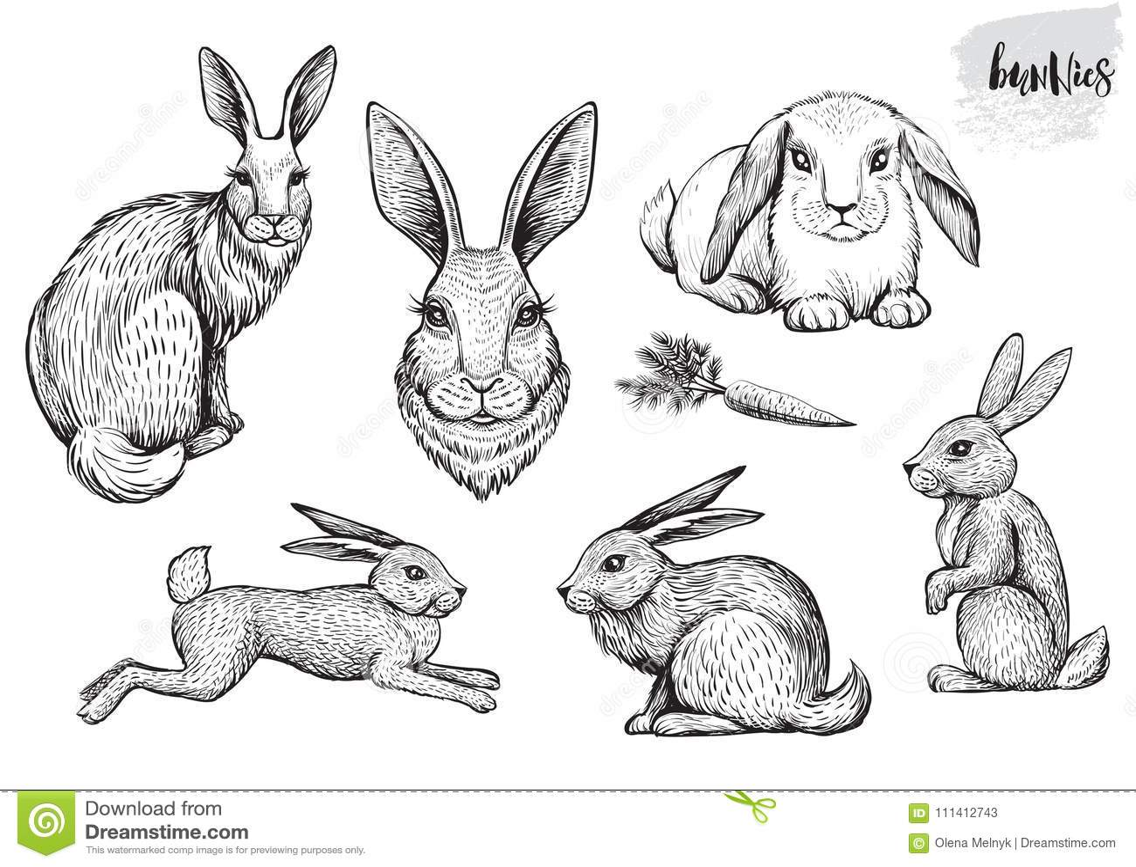 Drog Vektorillustrationer For Kanin Och For Hare Hand