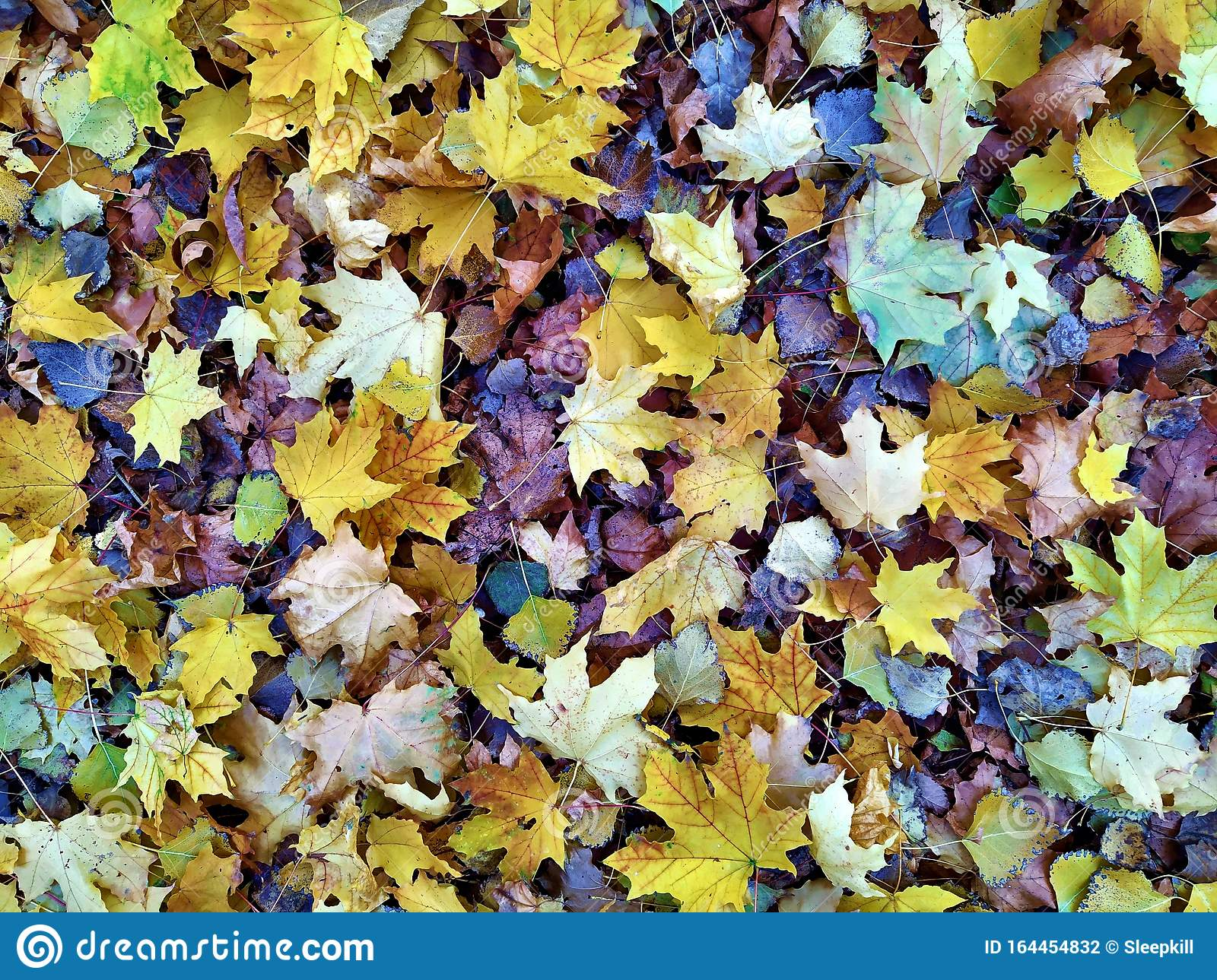 Dry Leaf On Ground Leafs Cover Surface Beautiful Nature