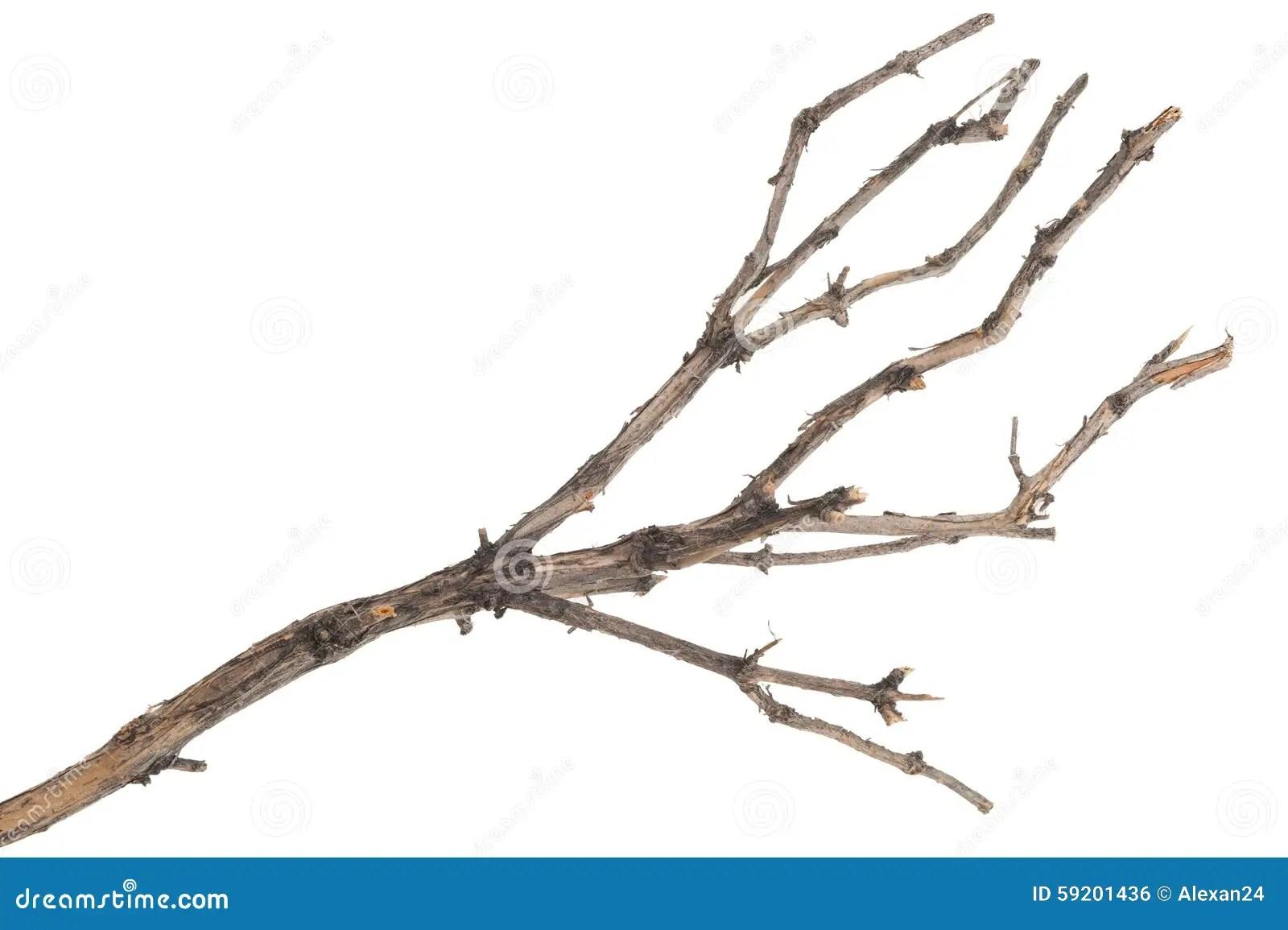 Dry Tree Stock Photo 12455670