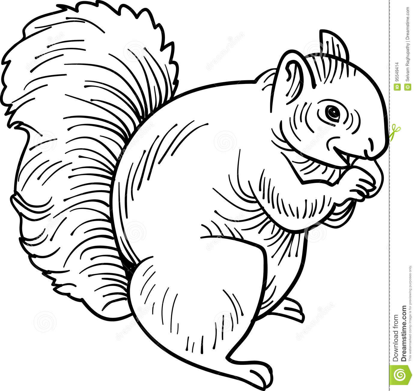 Eating Squirrel Stock Vector Illustration Of Pose Mouth