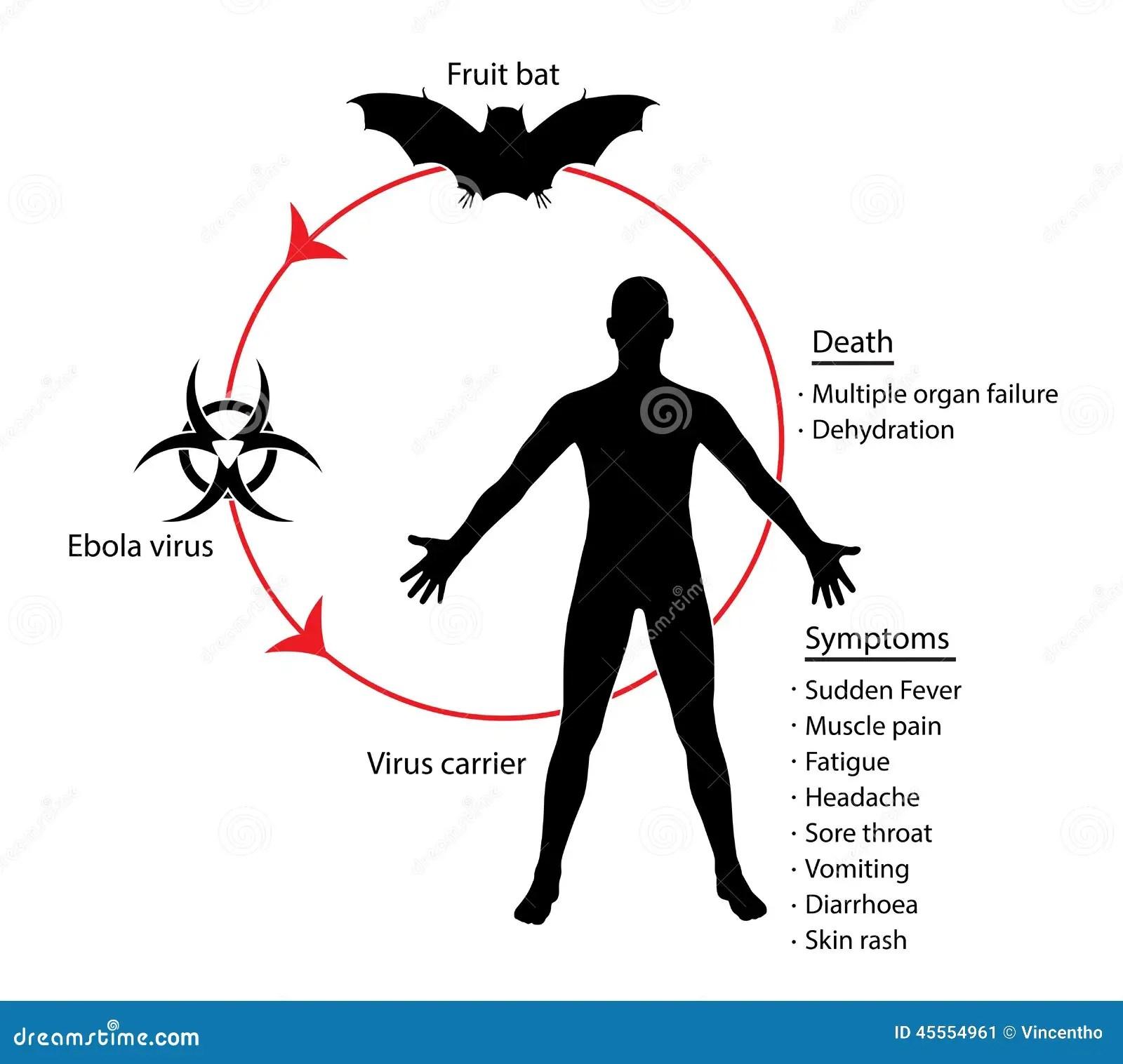 Ebola Basics Diagram Education Knowledge Illustration