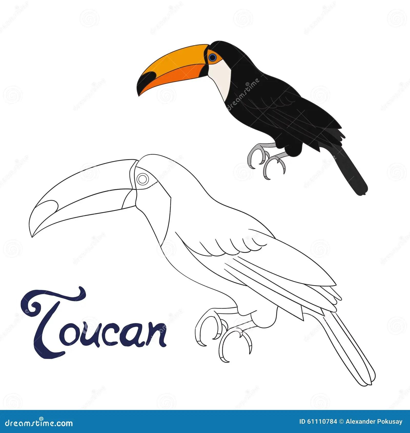 Educational Game Coloring Book Toucan Bird Vector Stock