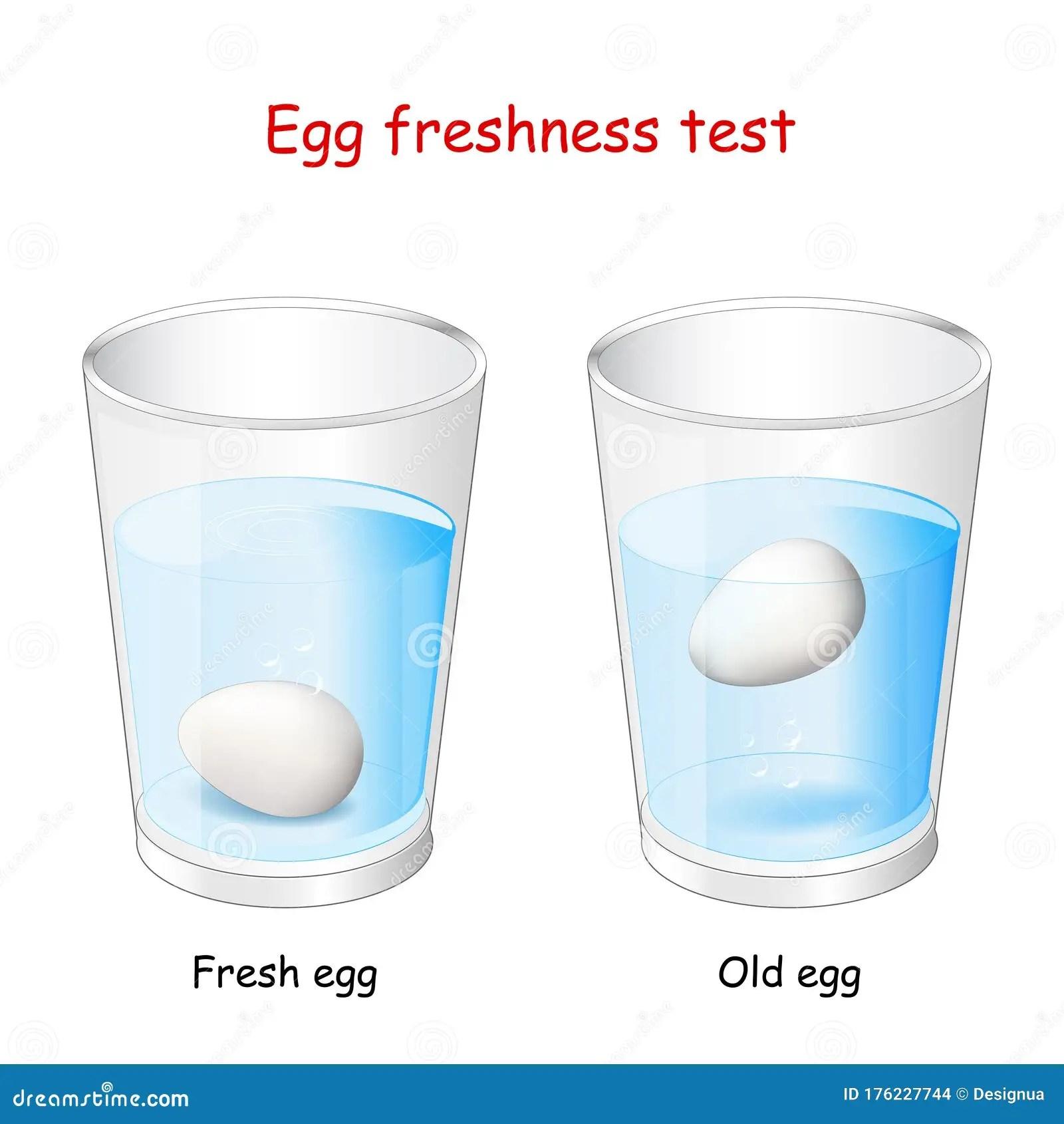 Egg Freshness Test Stock Vector Illustration Of Science