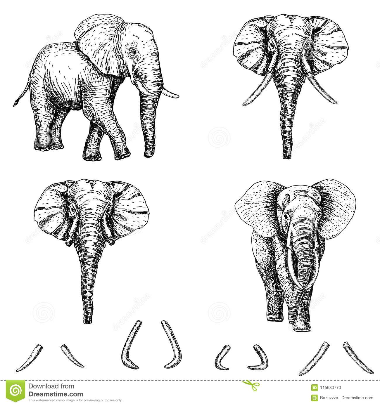 Elephant Tattoo Art Best Tattoo Ideas
