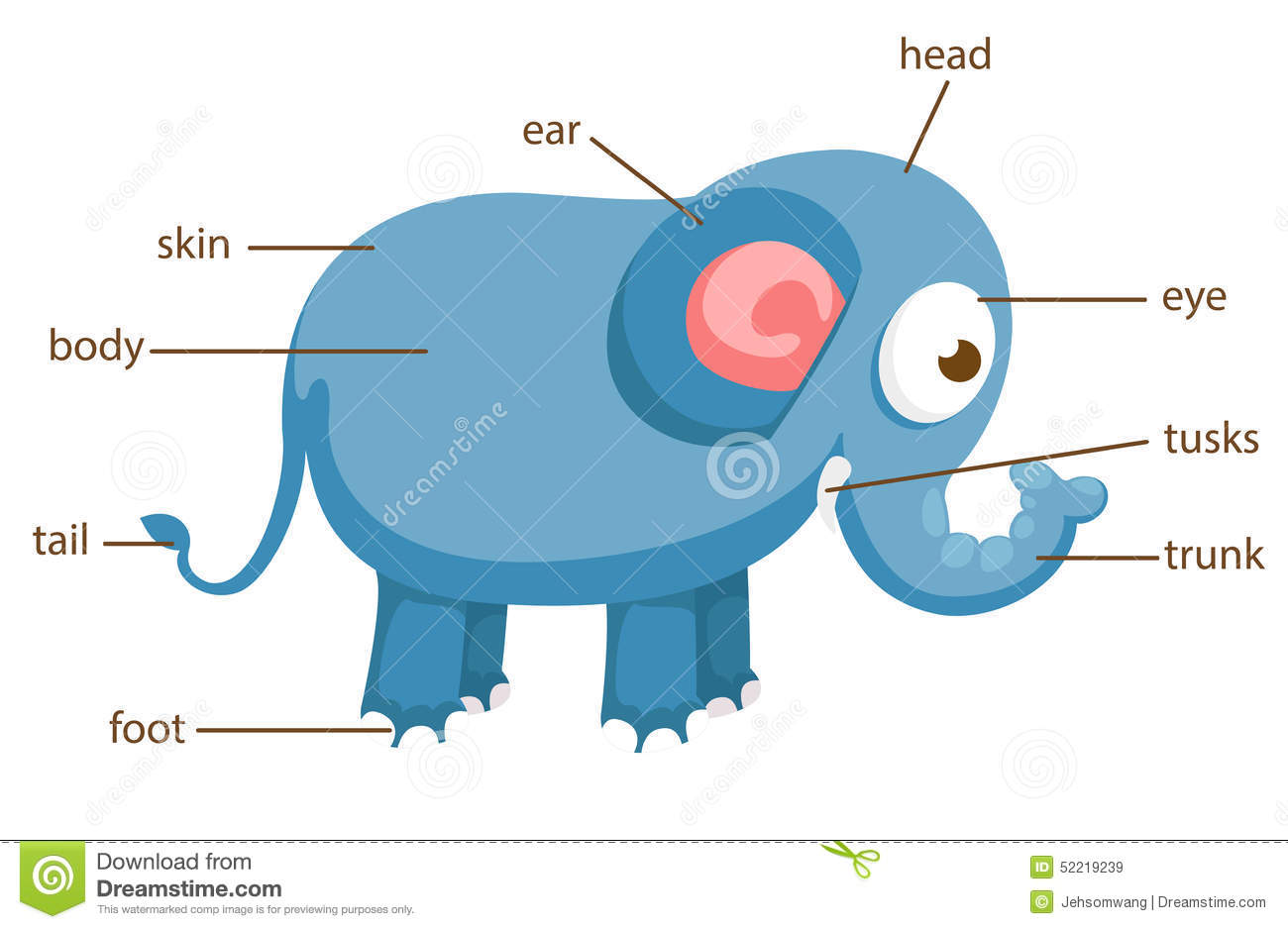 Elephant Vocabulary Part Of Body Vector Stock Vector