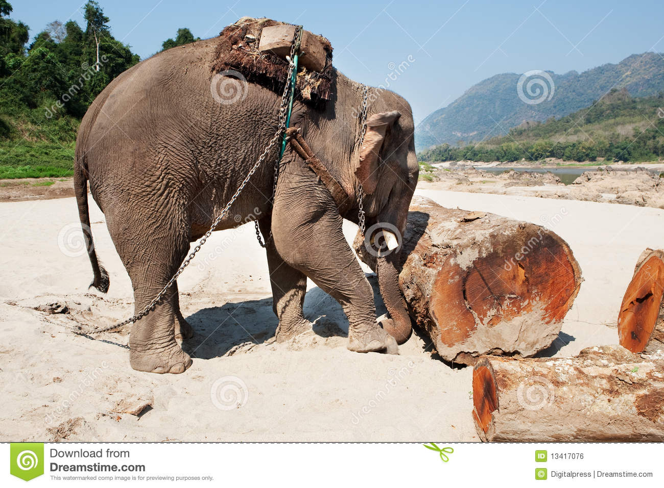 Elephant At The Work Stock Photo Image Of Laos Bull
