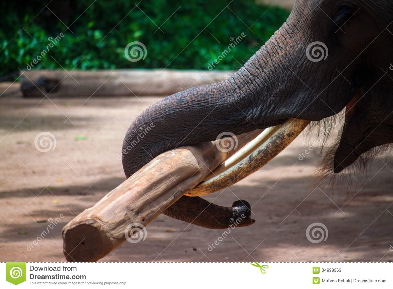 Elephant Working With A Log Stock Image