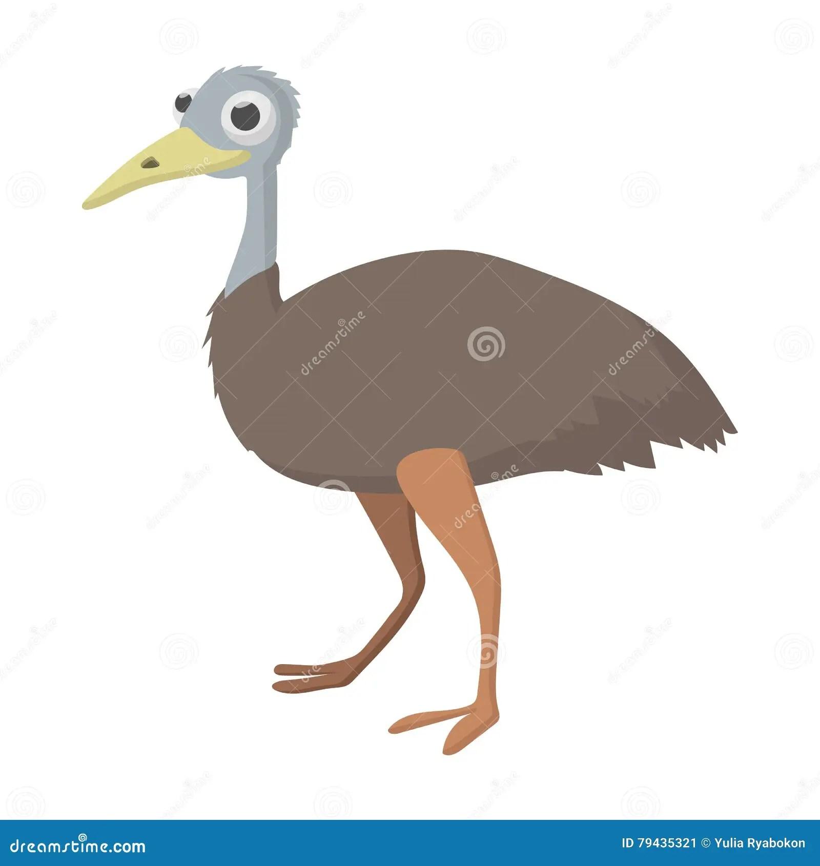 Emu Cartoons Illustrations Amp Vector Stock Images