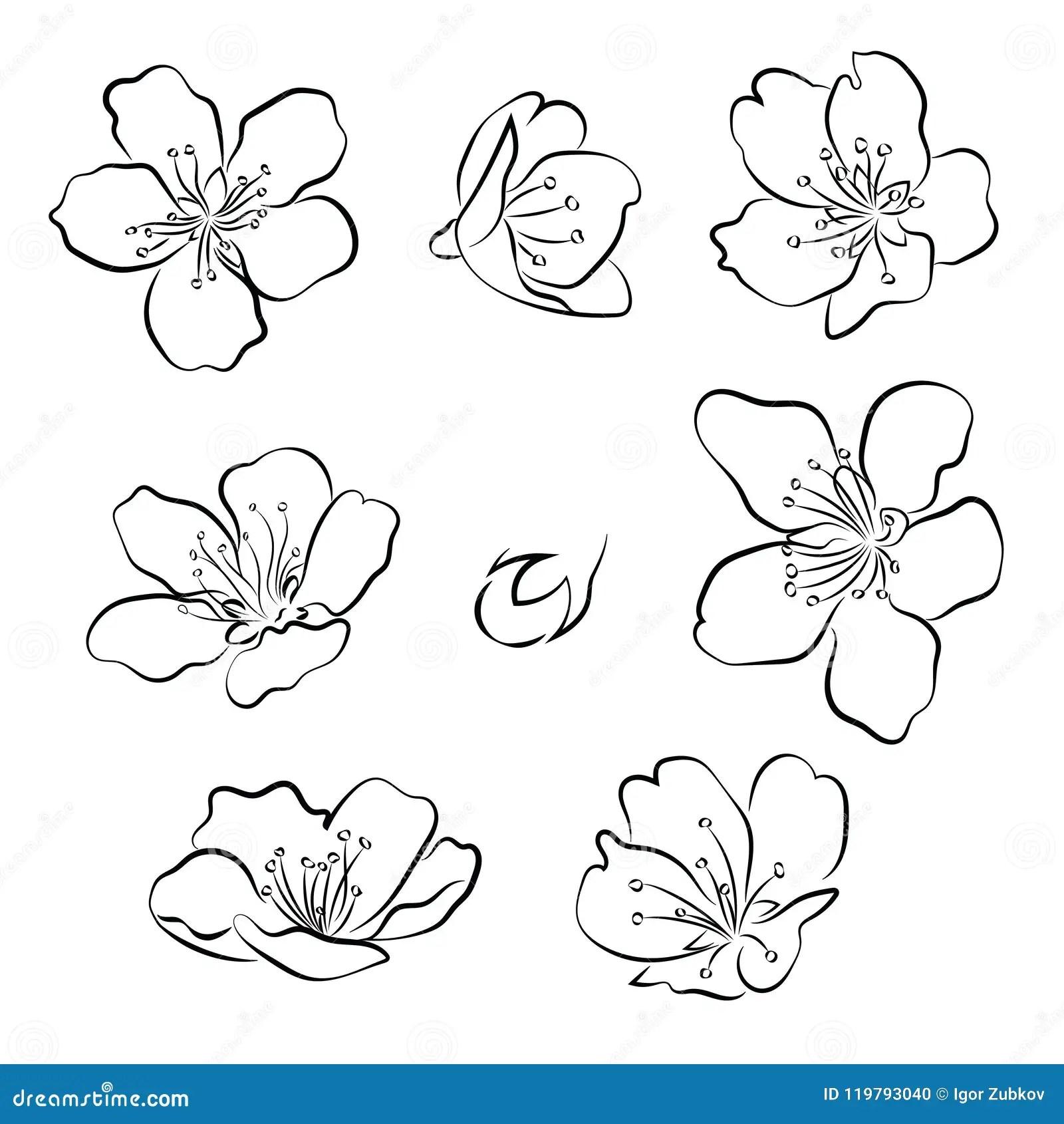 Ensemble De Fleurs De Cerisier Collection De Fleurs De Sakura Dessin Noir Et Blanc Des Fleurs De Ressort Art Lineaire Tatouage Illustration De Vecteur Illustration Du Trame Main 119793040