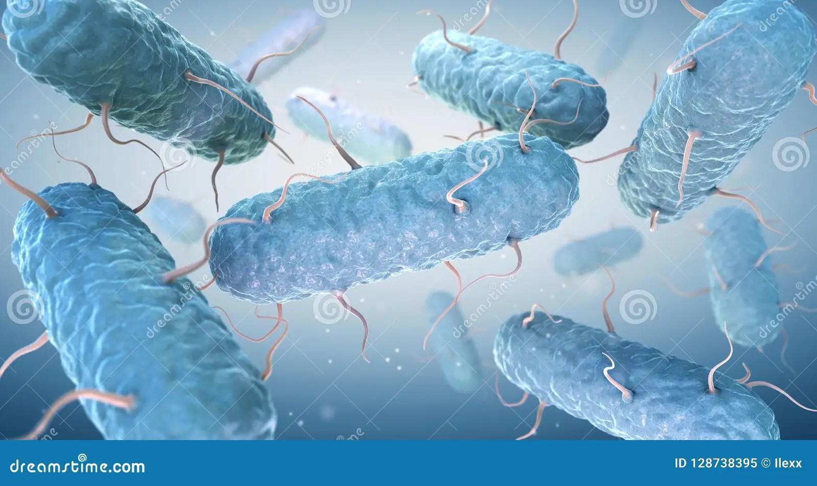 Enterobacteria Enterobacteriaceae Are A Large Family Of
