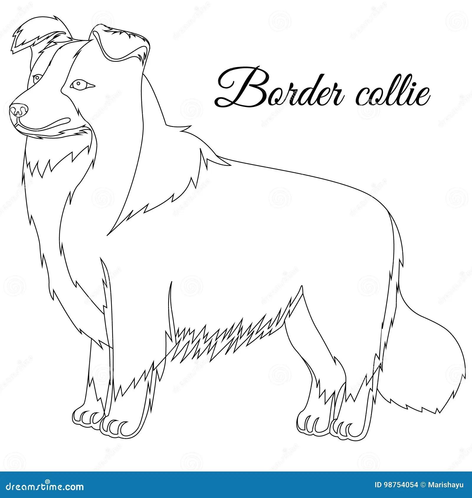 Esboco Do Cao De Border Collie Ilustracao Do Vetor