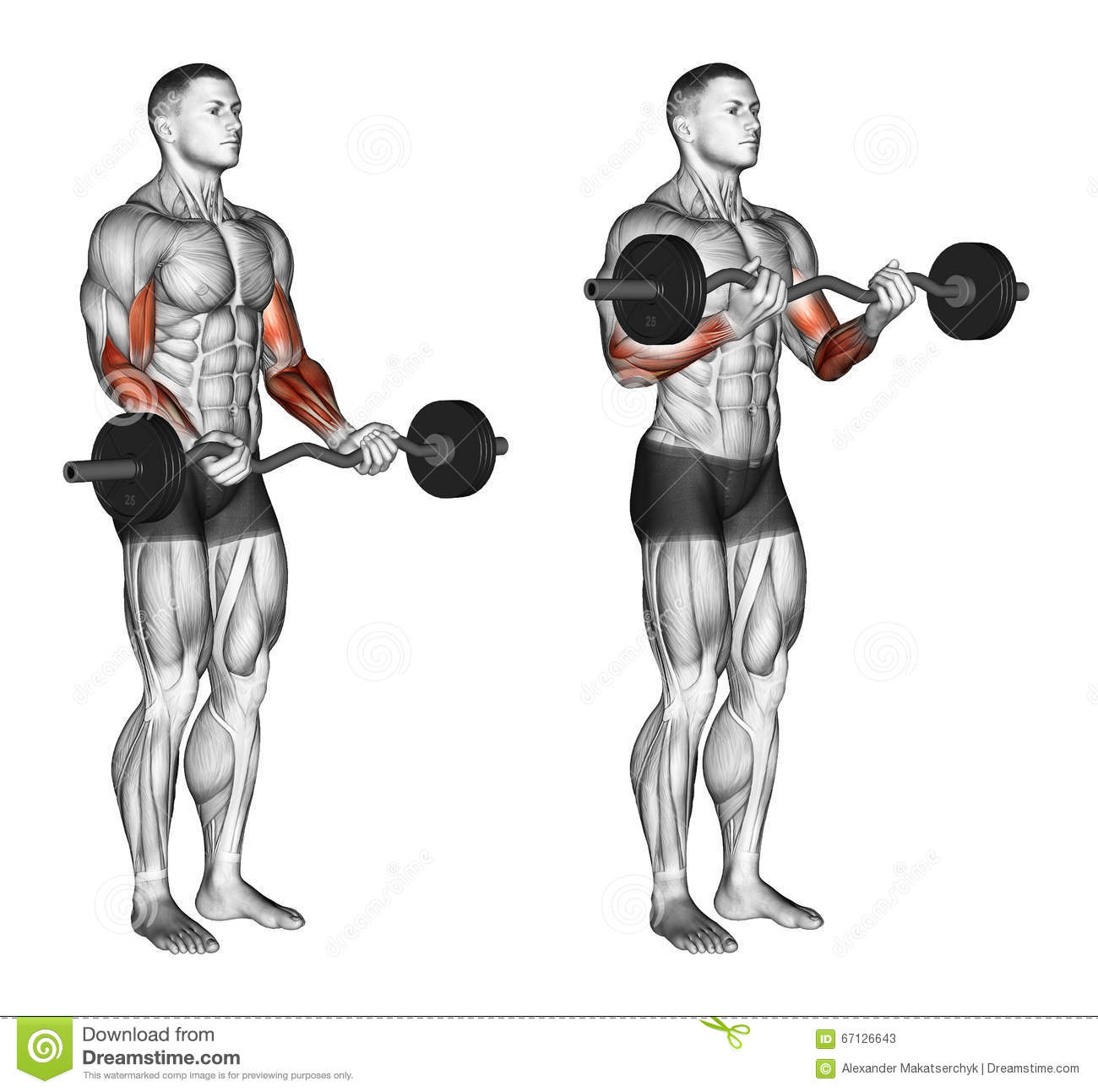Exercising Ez Bar Curls Stock Illustration Illustration