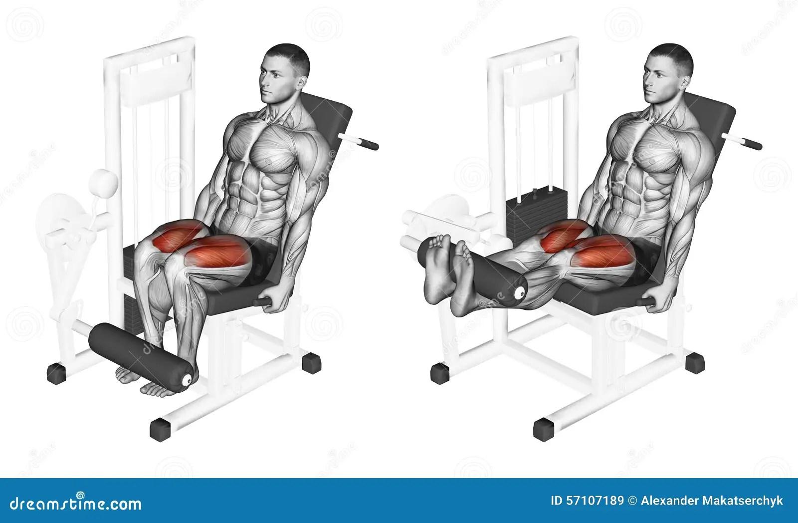 Quadriceps Cartoons Illustrations Amp Vector Stock Images