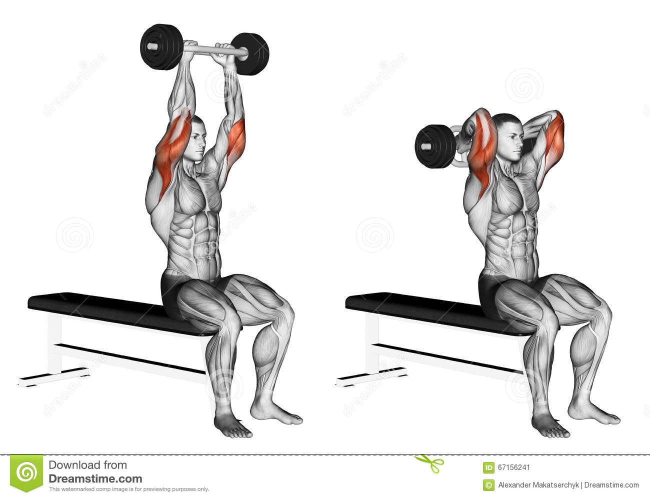 Exercising Olympic Tricep Bar Extension Stock