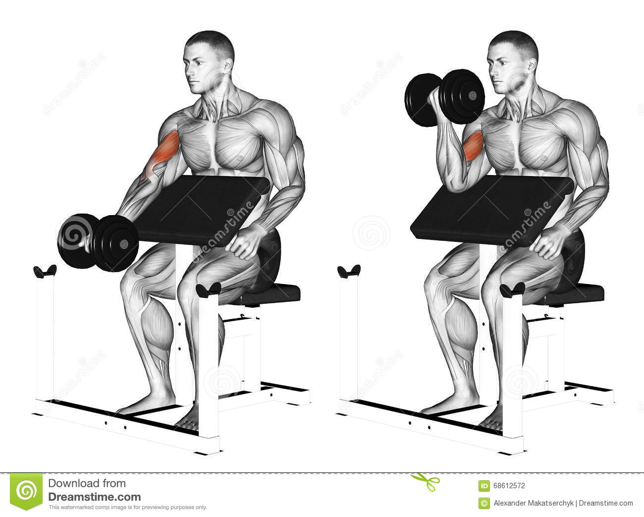 Exercising One Arm Dumbbell Preacher Curl Stock