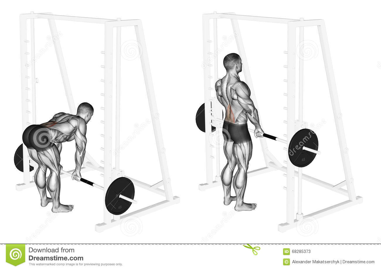 Exercising Smith Machine Dead Lifts Stock Illustration