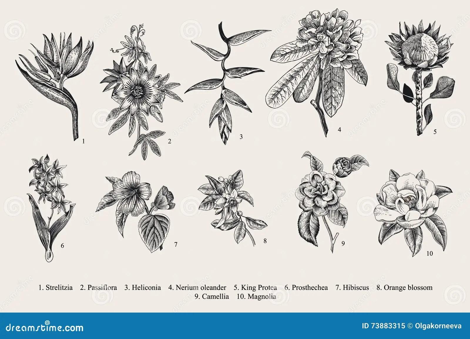Exotic Flowers Set Botanical Vector Vintage Illustration