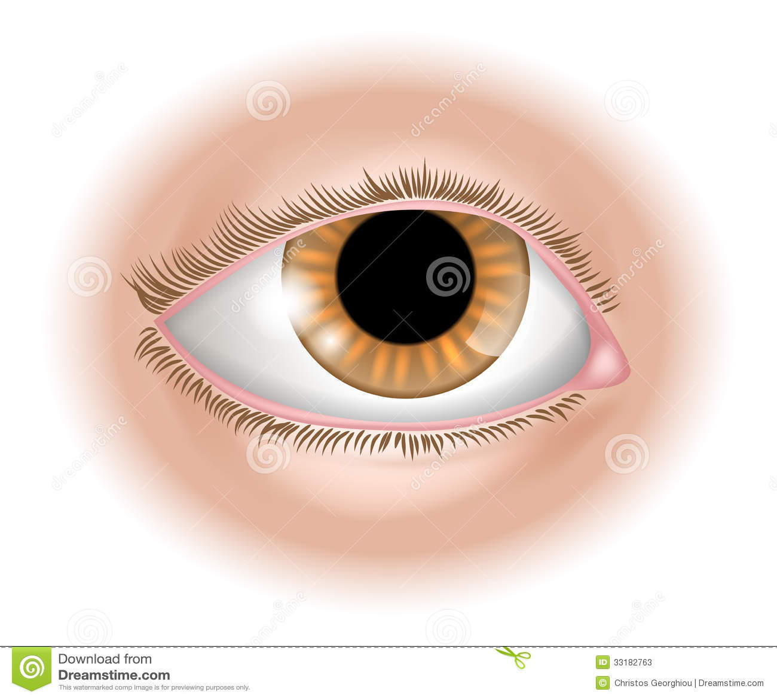 Eye Body Part Illustration Stock Photos