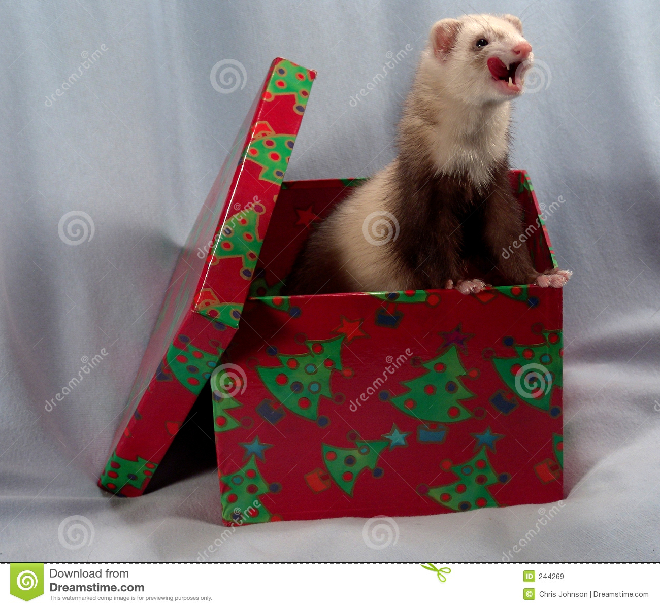 Ferret In A Box Royalty Free Stock Images Image 244269