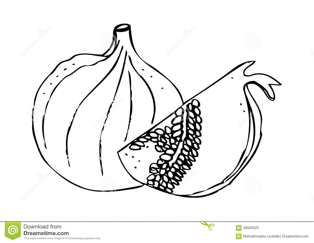 A Fig And A Pomegranate Stock Illustration Illustration