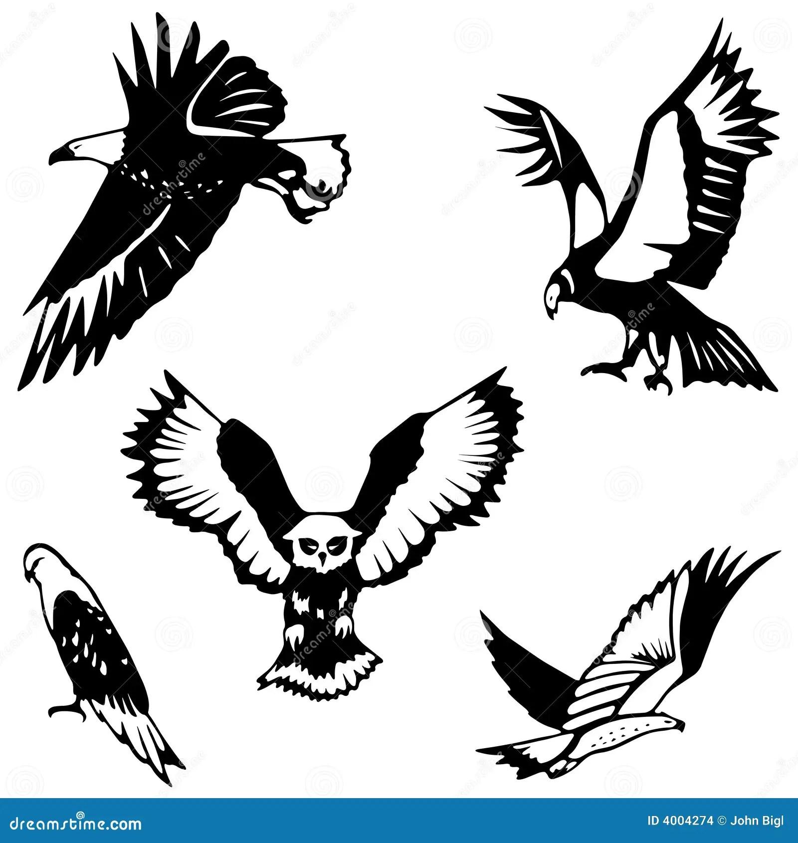 Five Birds Of Prey Stock Vector Illustration Of Kite