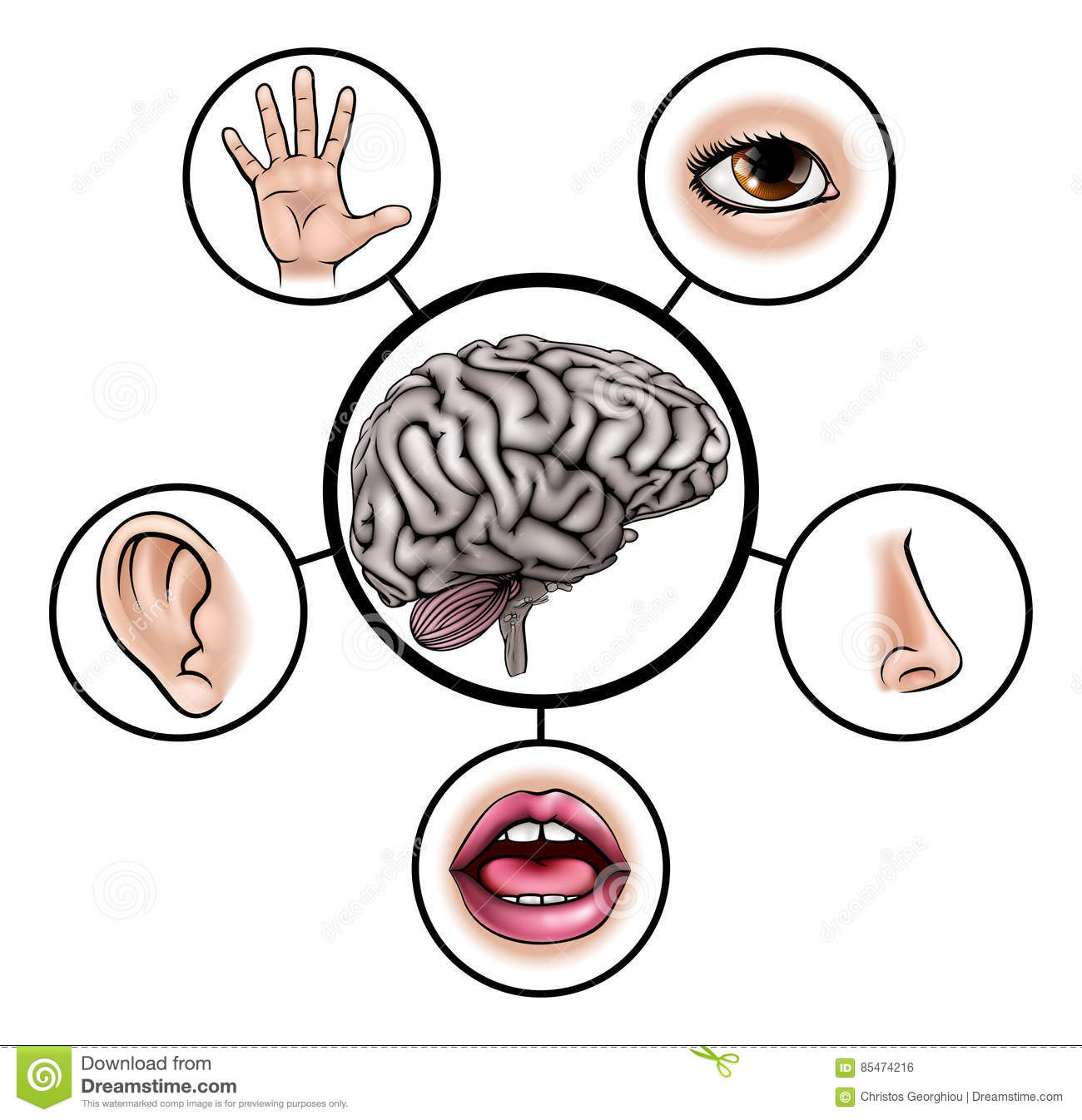 Five Senses Brain Stock Vector Illustration Of Clip