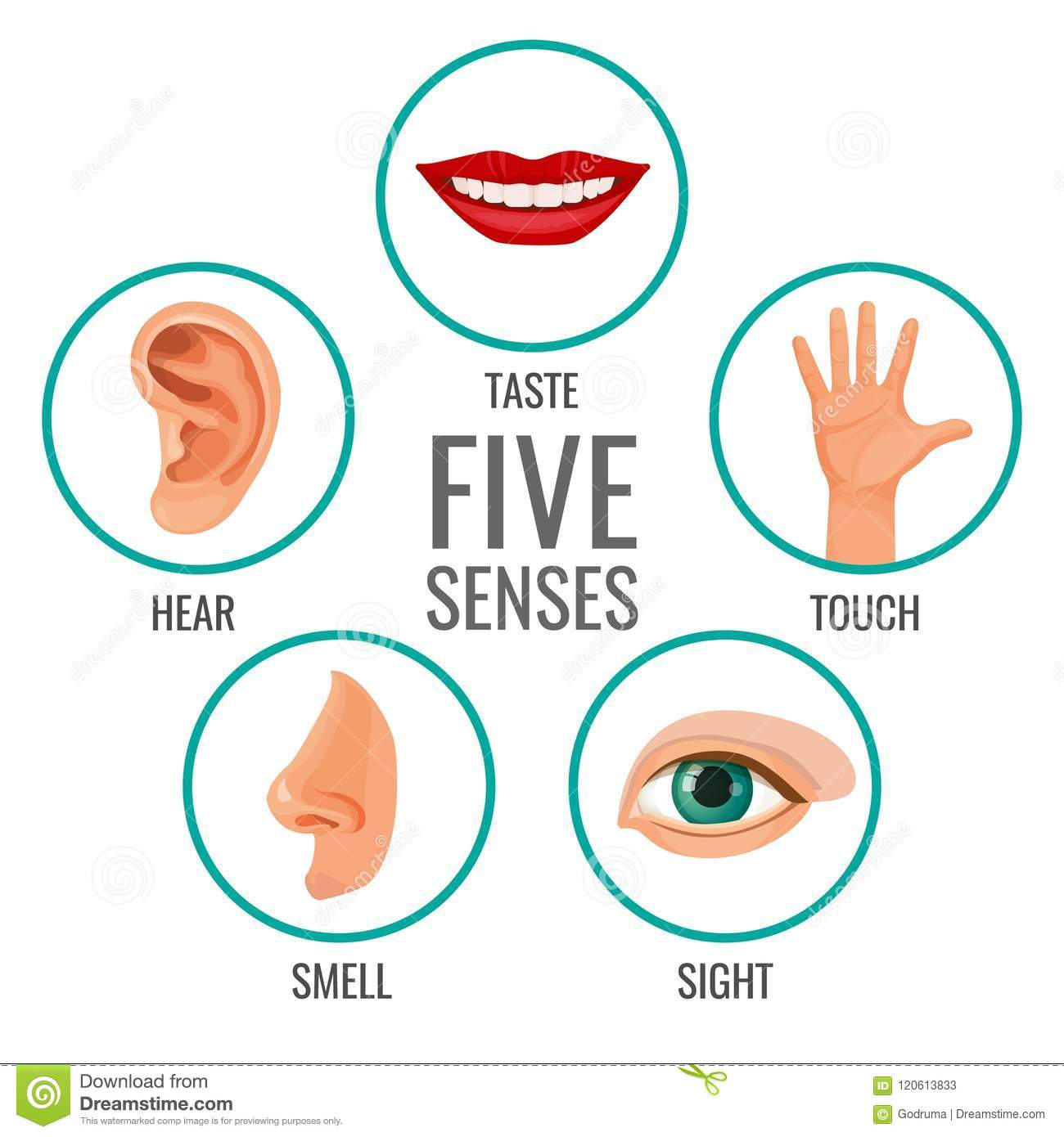 Five Senses Of Human Perception Poster Icons Taste And