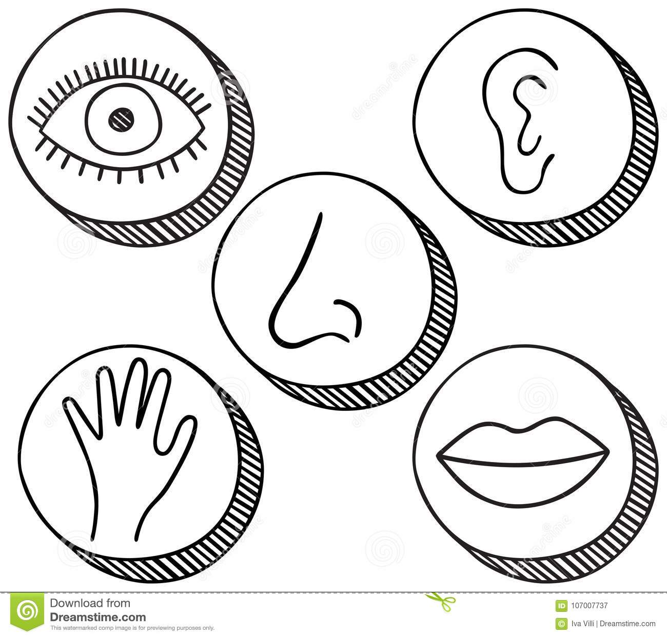 Five Senses Icons Stock Vector Illustration Of