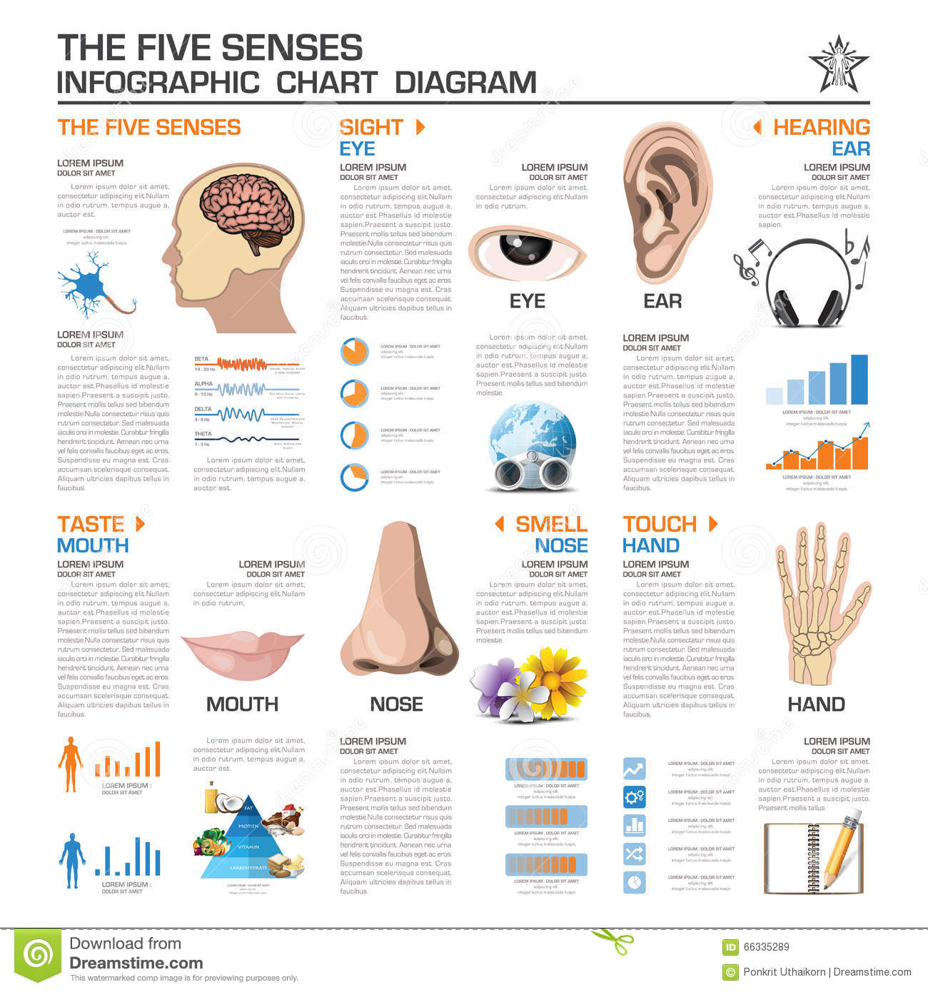 The Five Senses Infographic Chart Diagram Stock Vector
