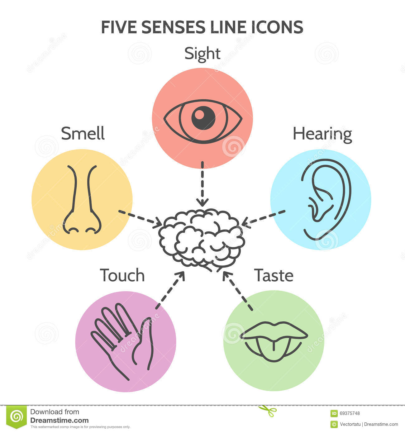 Five Senses Line Icons Stock Vector Illustration Of Icon