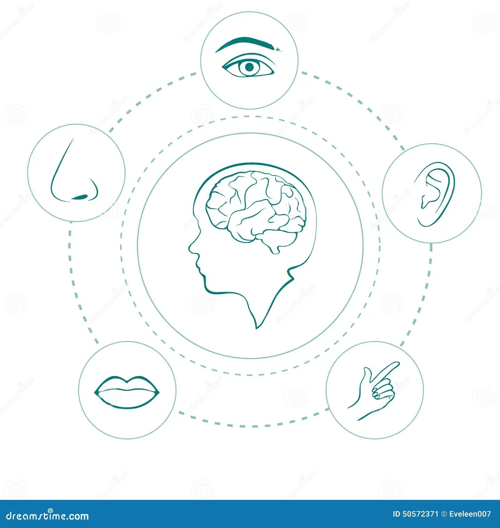 Five Senses Stock Vector Illustration Of Finger Face