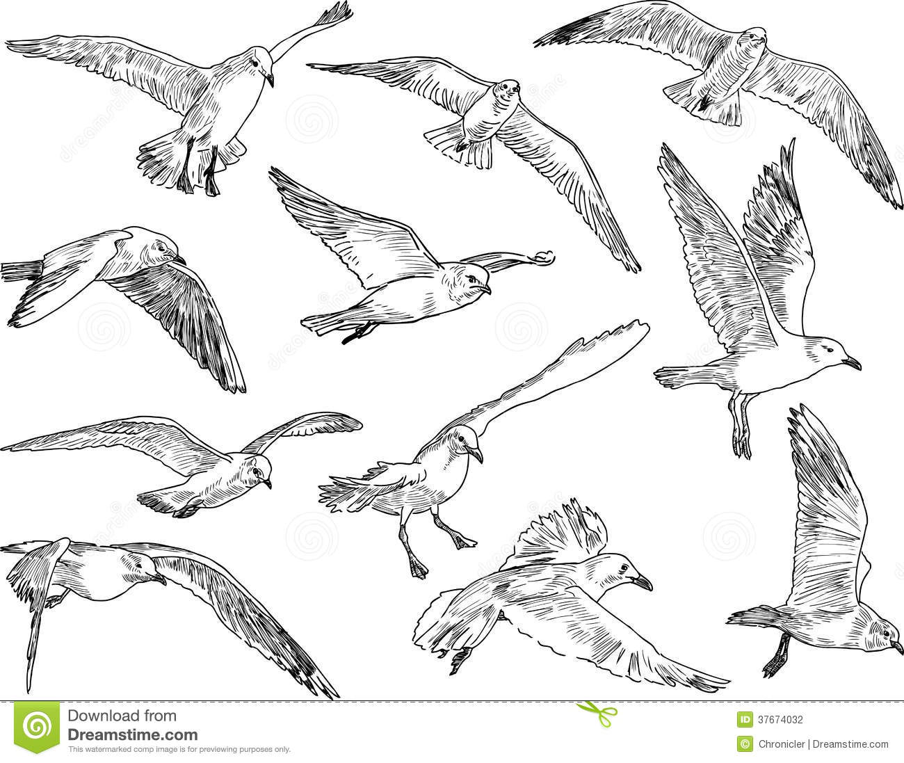 Flock Of Seagulls Stock Photo Image Of Flying Drawn