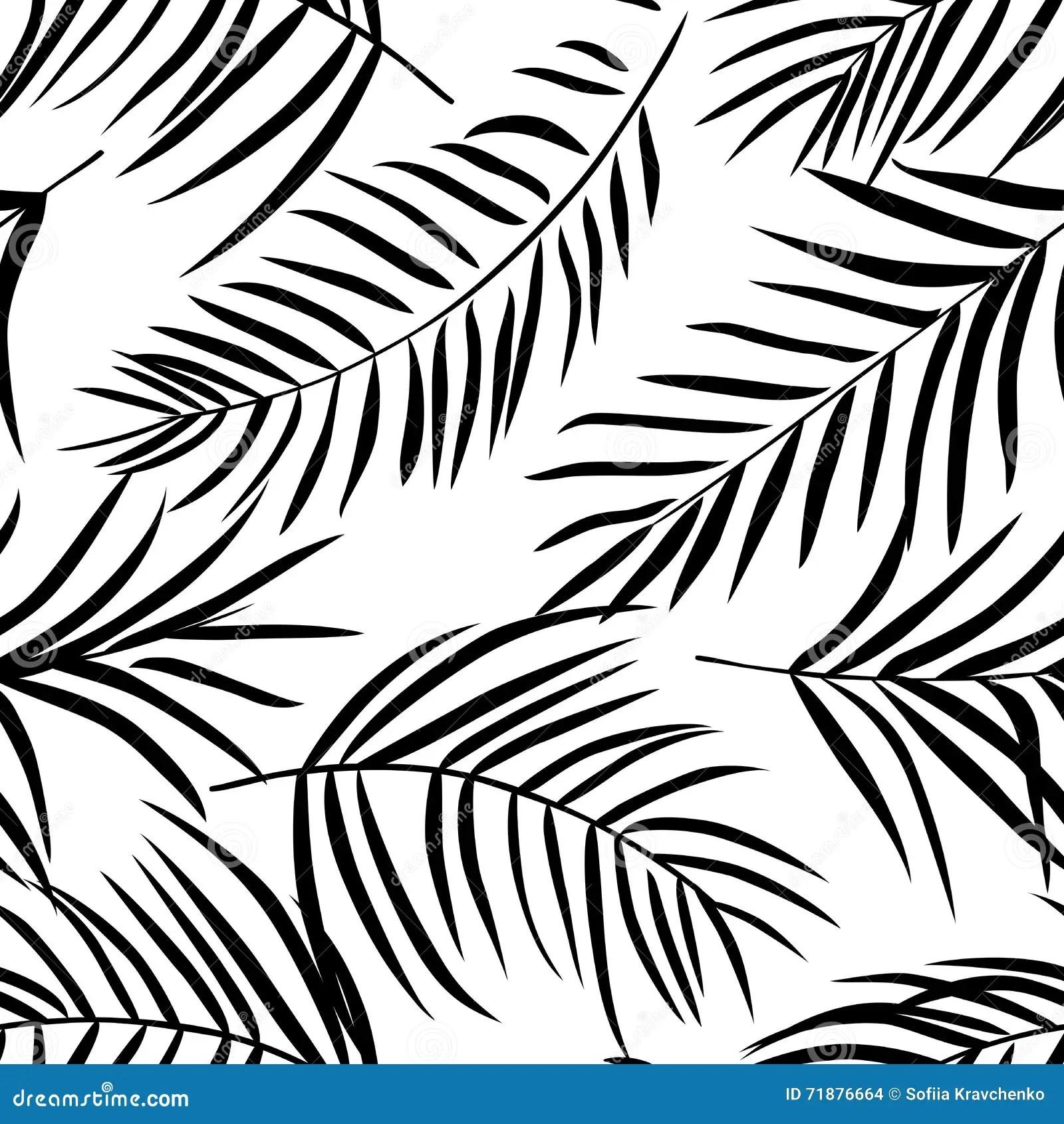 Folhas De Palmeira Tropicais Preto E Branco Ilustracao Do
