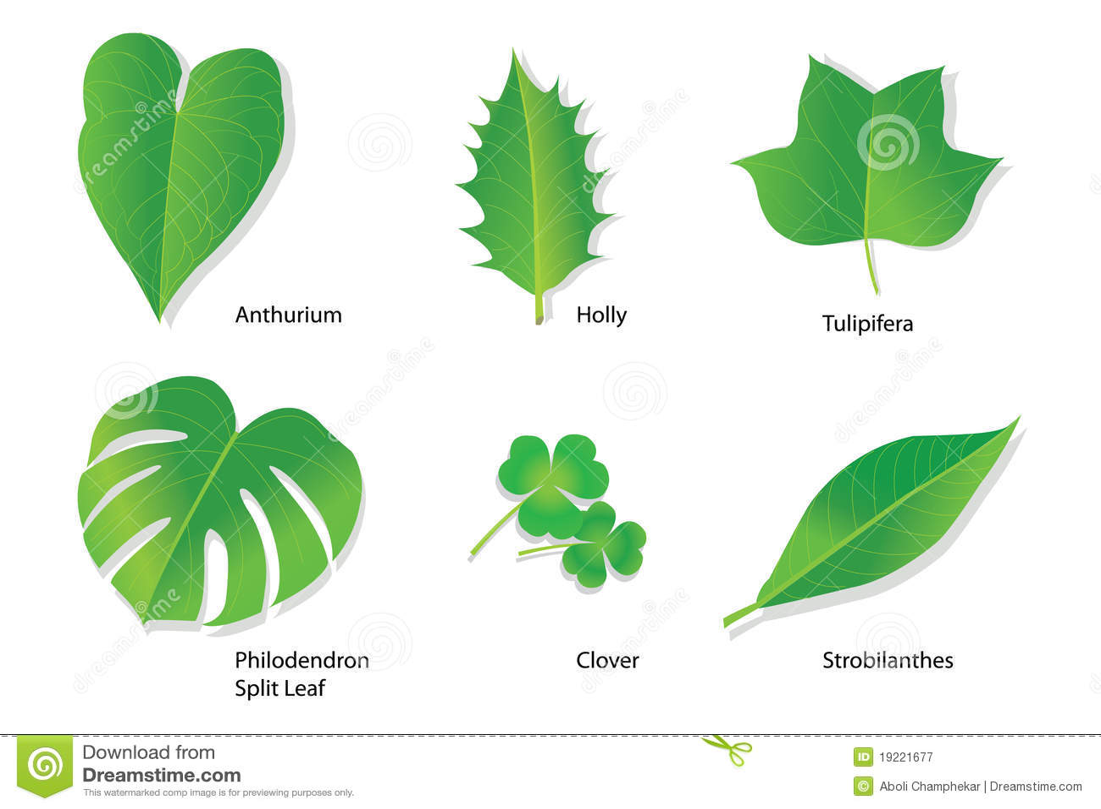 Folhas Tropicais Com Nomes Botanicos Fotografia De Stock