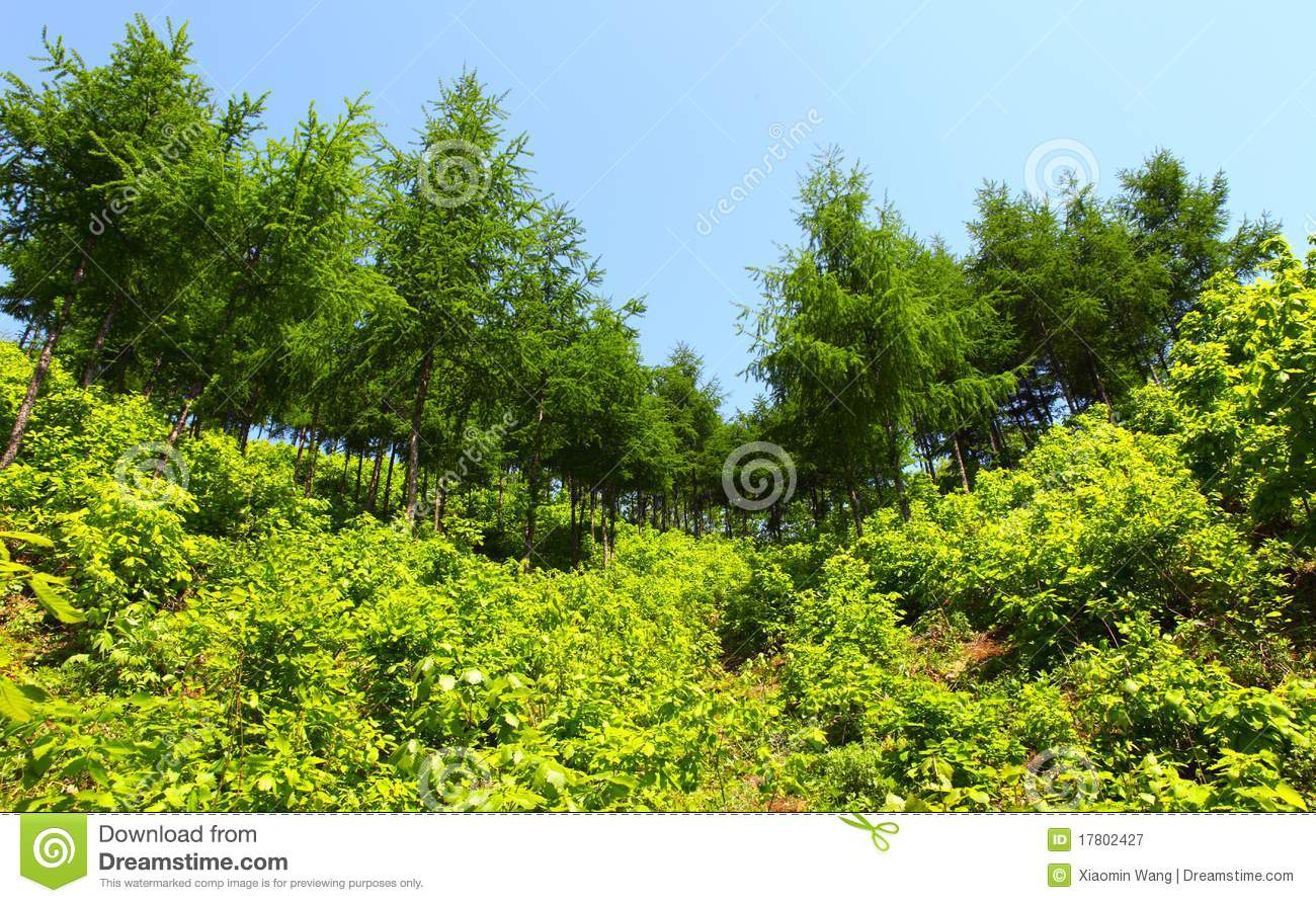 Fresh Plants And Trees Royalty Free Stock Photography