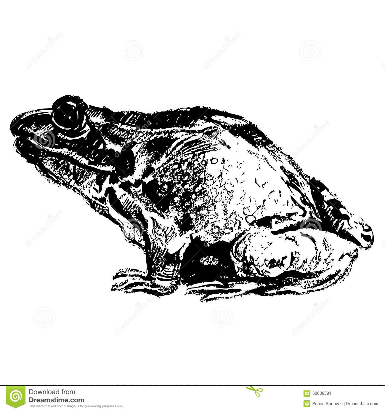 frog hand drawn stock vector