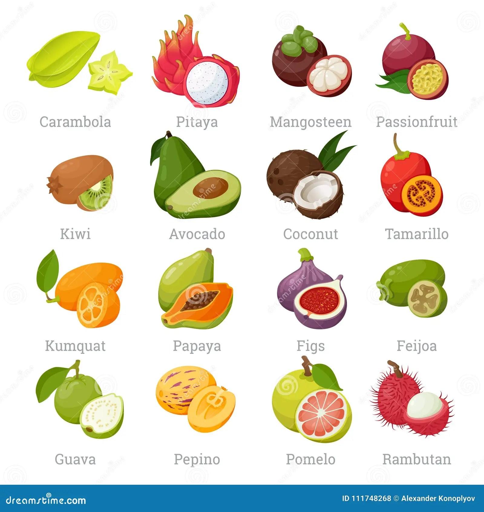Fruits Tropicaux Exotiques Regles Avec Des Noms Illustration De Vecteur