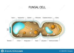 Vacuole Cartoons, Illustrations & Vector Stock Images