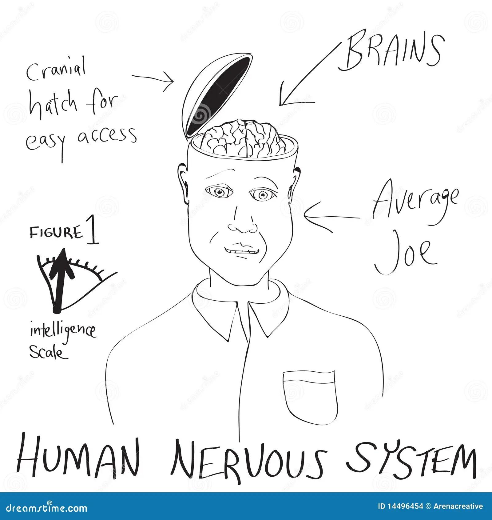 Funny Human Brain Cartoon Stock Illustration Illustration