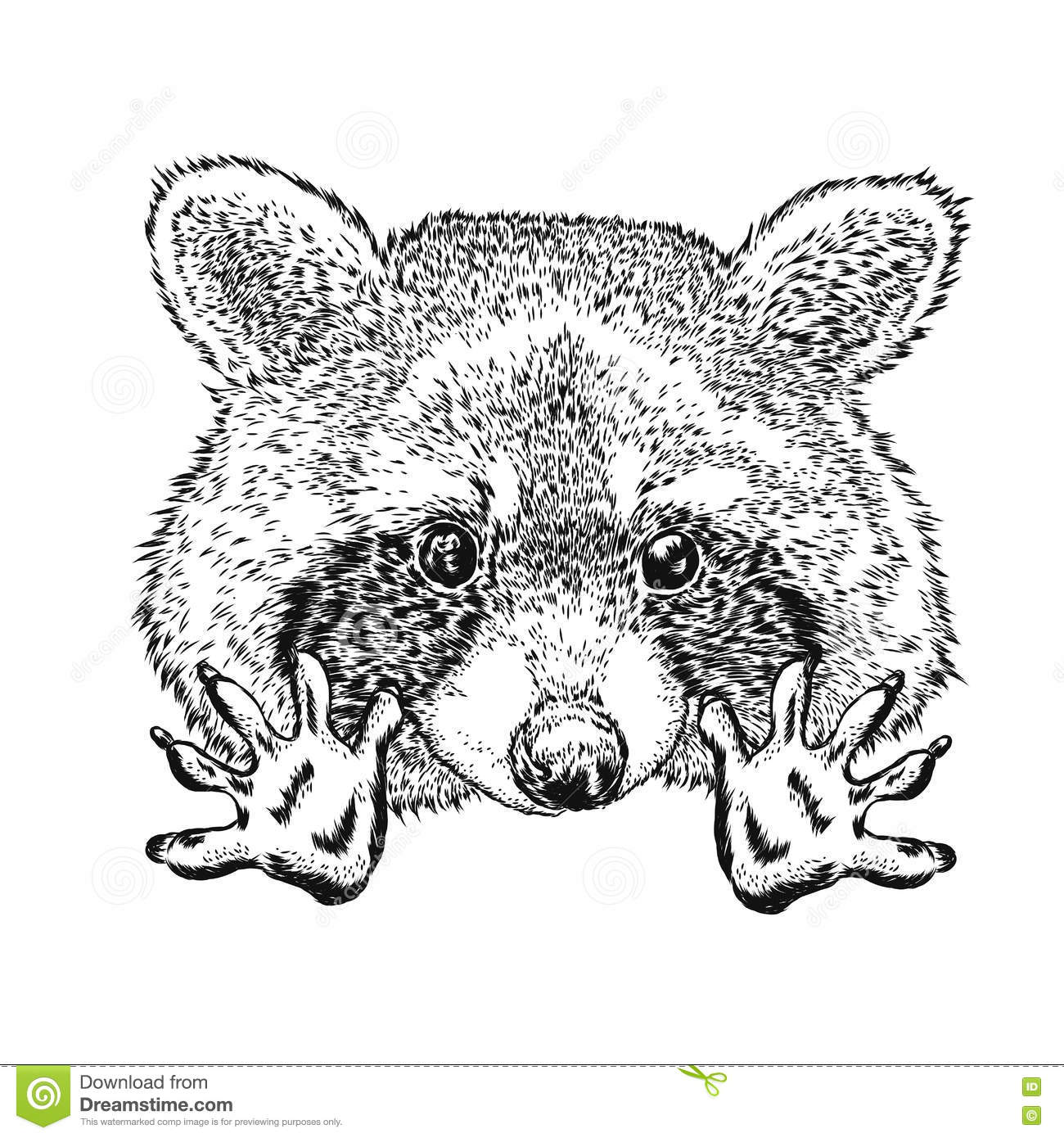 Funny Raccoon Vector Illustration