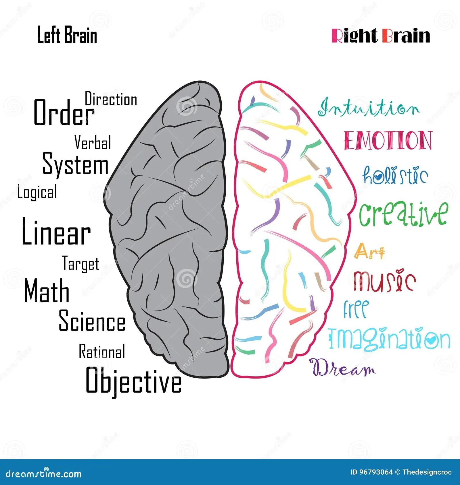 Funzioni Da Sinistra A Destra Del Cervello Umano