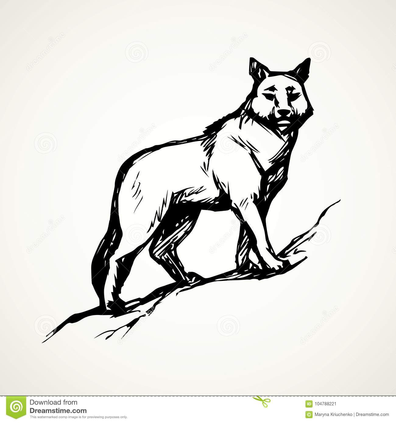 Wolf Vector Drawing Stock Vector Illustration Of Hunting