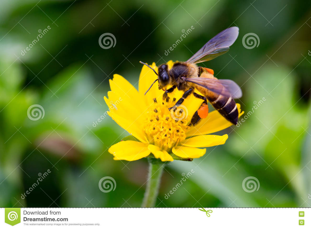 Gaysorn Bees Are Nectar From Flowers  Bee On Flowers With Grassland     Download comp