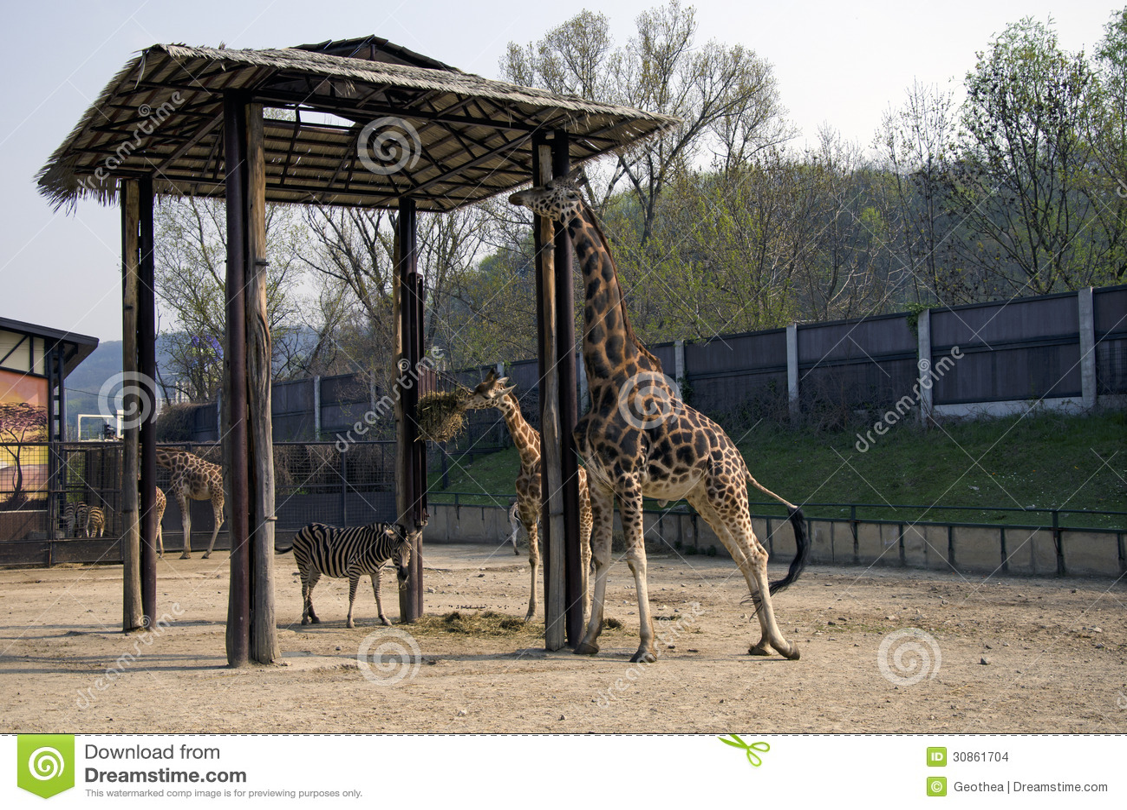Giraffe And Zebra In Zoo Bratislava Stock Images