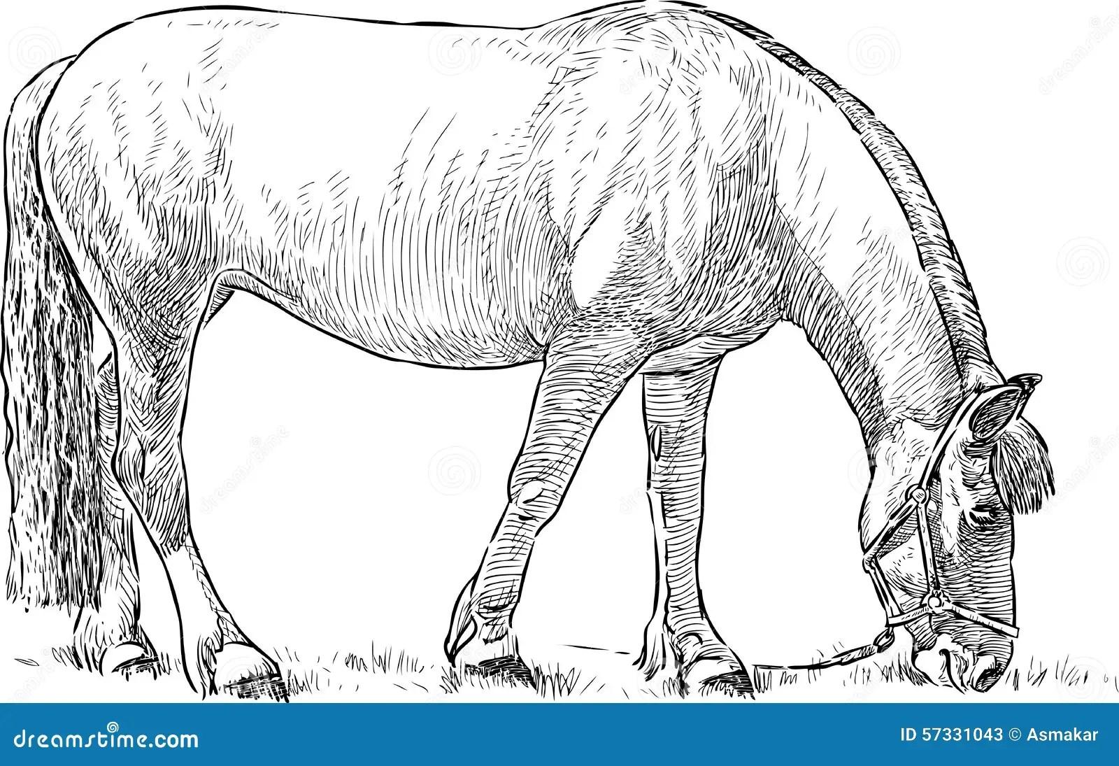 Grazing Horse Stock Vector Image Of Livestock Hand