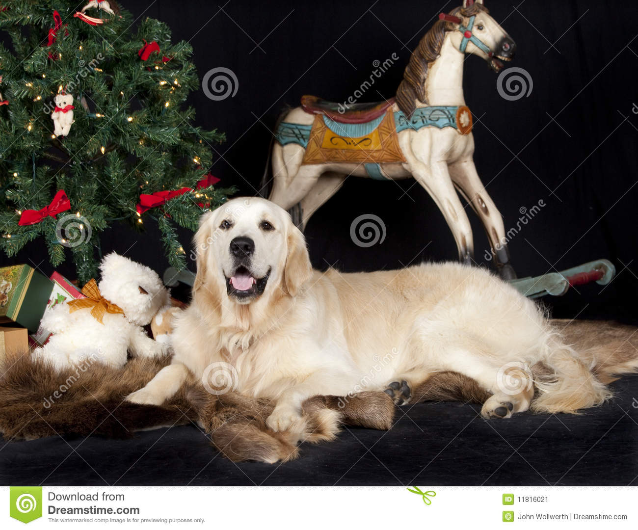 Golden Retriever And Christmas Tree Stock Image Image