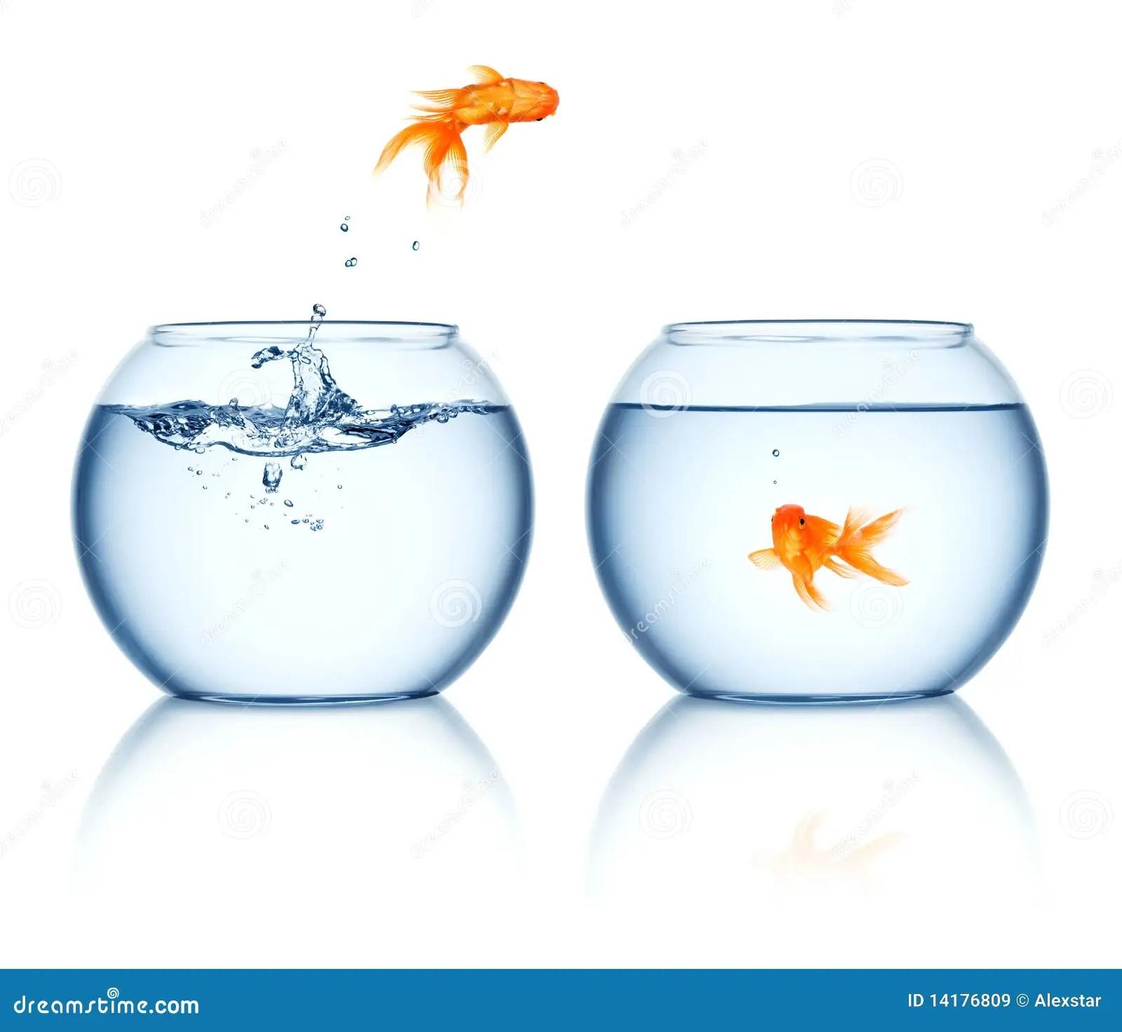 Goldfish Jumping Out Bowl Stock Image Image Of Stunt