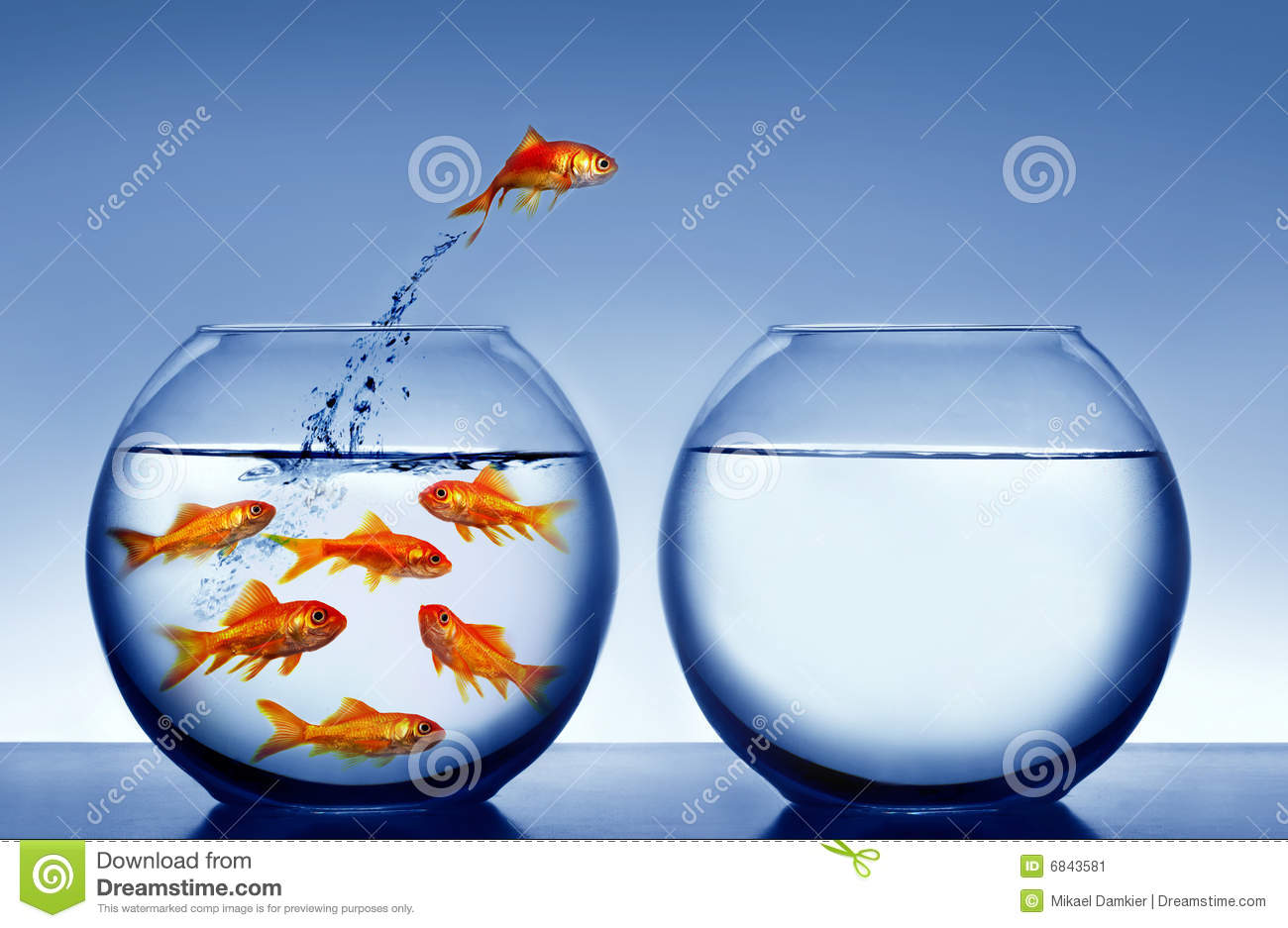 Goldfish Jumping Out Of The Water Stock Image Image Of